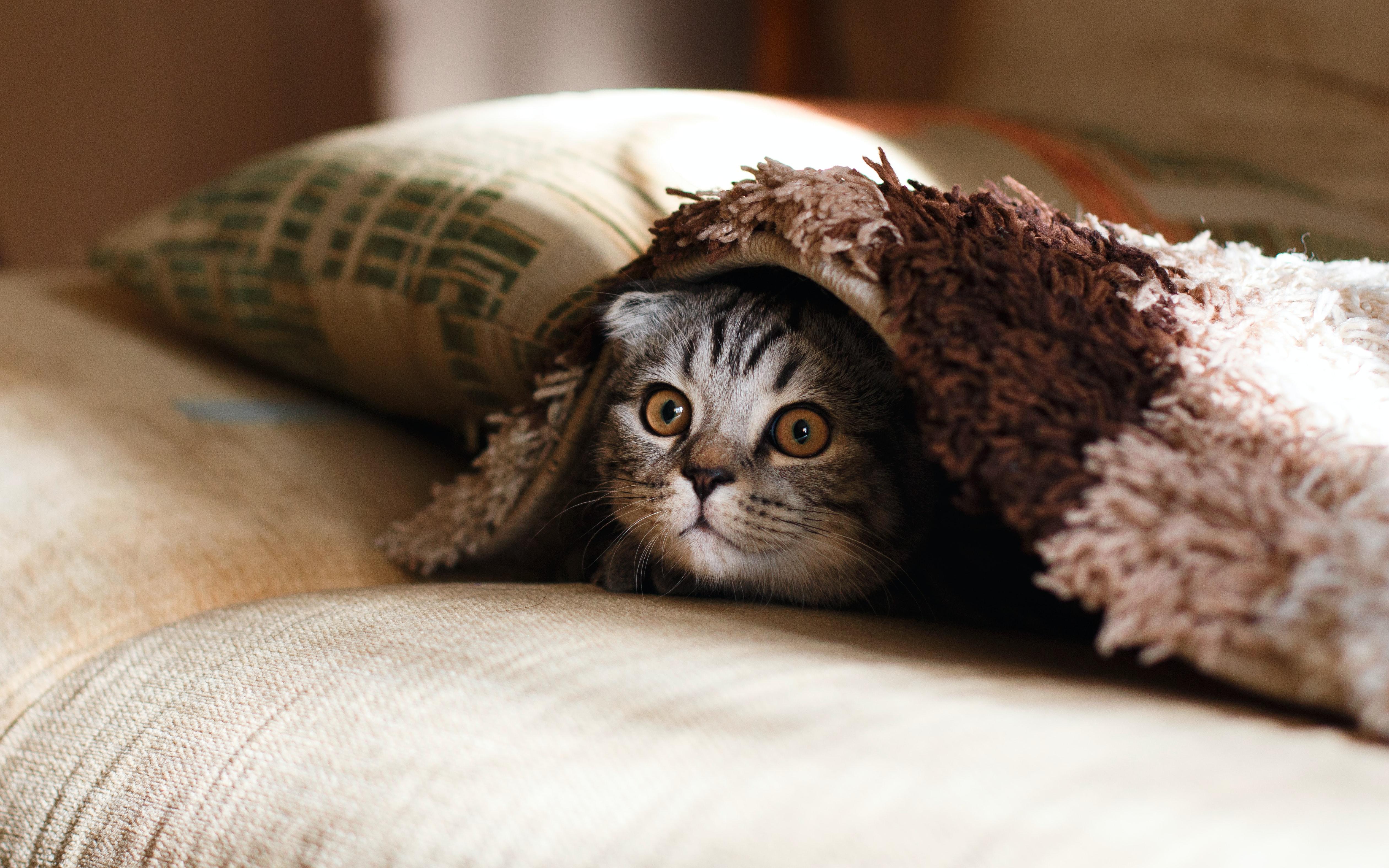 Pelíšek si kočka často vybírá sama, ráda se ale schová před světem, proto jsou vhodné boudičky, které poskytnou dostatek soukromí. Postačí ale i obyčejná deka.