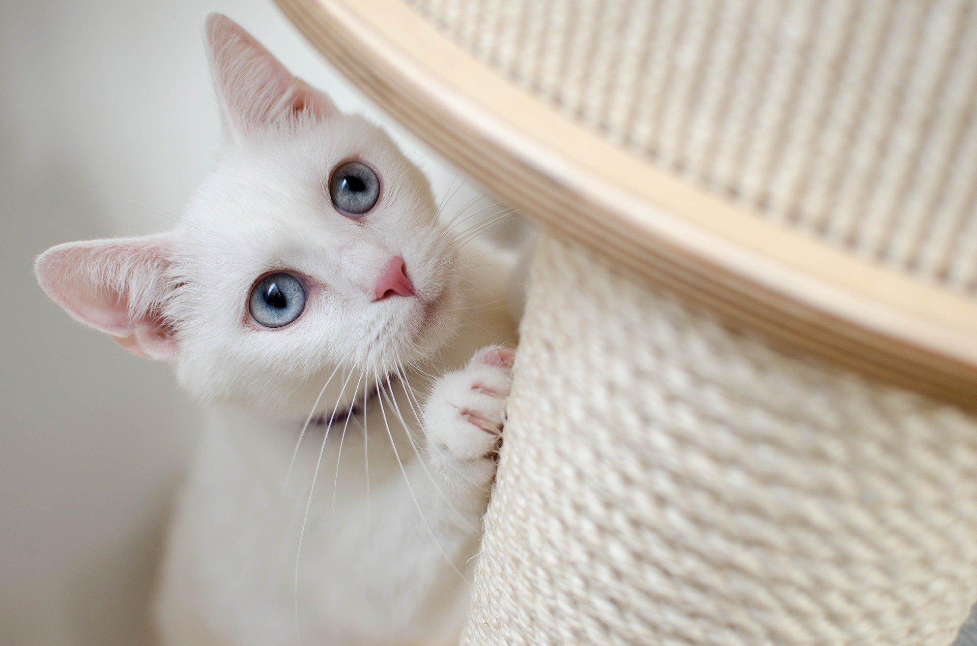 Škrabadlo by mělo ladit s interiérem bytu, ale můžete jej sladit i s barvou kožichu vaší kočky