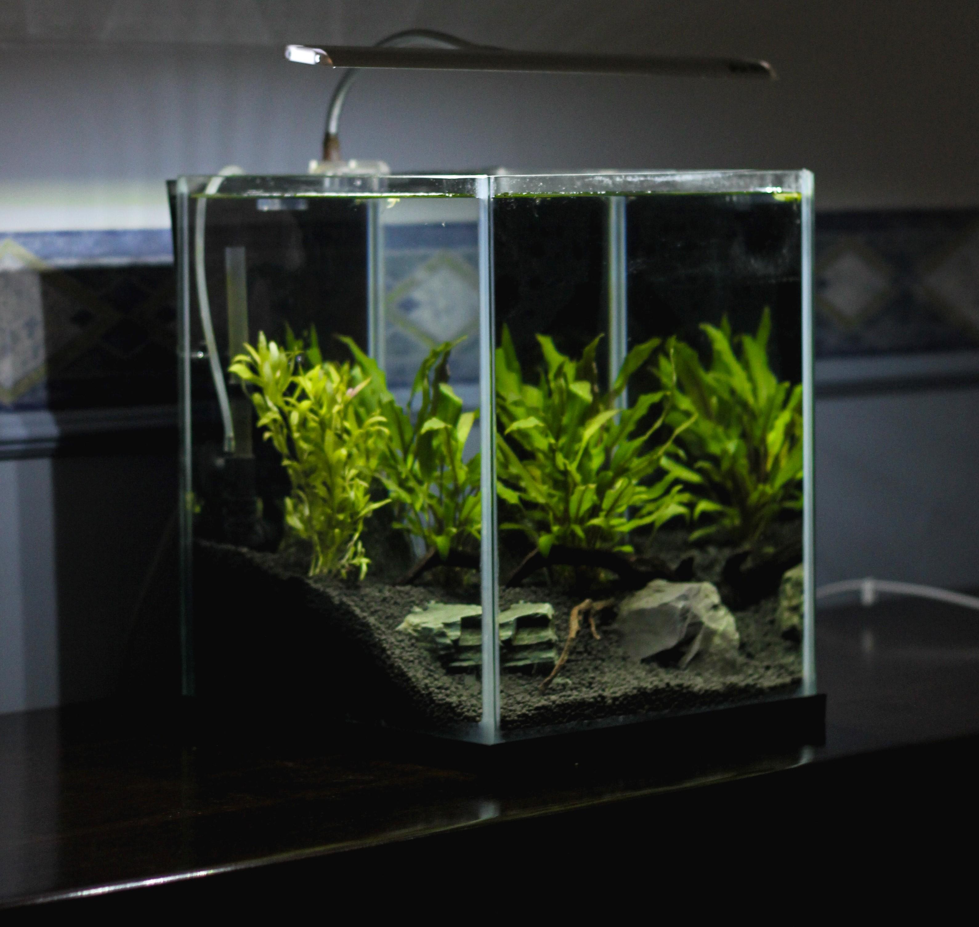 Skleněné akvárium s kameny a vodními rostlinami