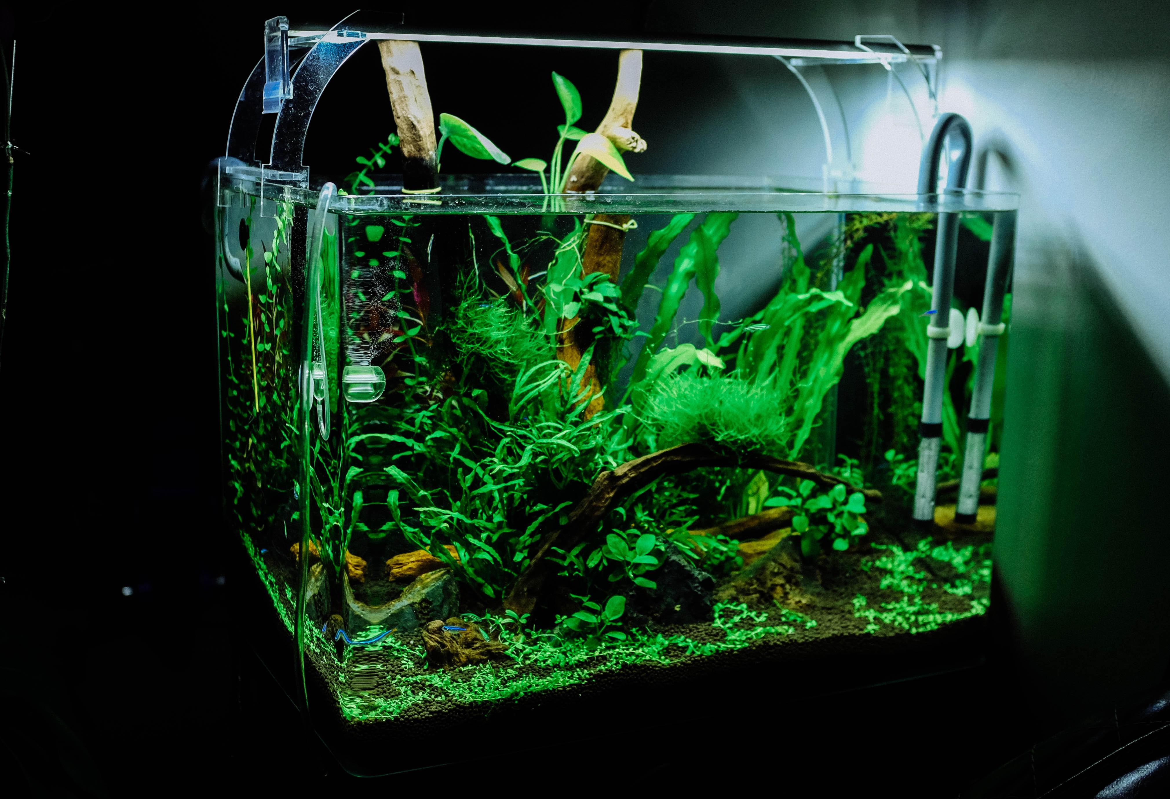 Skleněné rostlinné akvárium bude skvělým doplňkem do obývacího pokoje