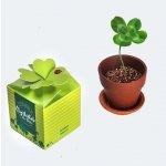 Vypěstuj si čtyřlístek štěstí CZ obsahuje: 1x keramický květináč, 1x kompost, semínka čtyřlístku