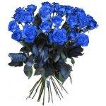 Modré růže