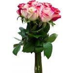 Růže Malibu