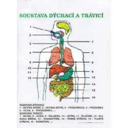 Soustava Dýchací A Trávicí Plakát A2 S Horní Lištou Výukové Plakáty Přírodověda