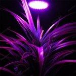 LED žárovka fialová, 2W E27 pro rostliny S0334