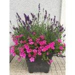 Plastia Bergamot Samozavlažovací Květináč antracit - 40 x 40 x 30 cm