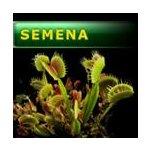 Masožravé rostliny - semena | Dionaea muscipula - mucholapka podivná | směs klonů | 20 semen