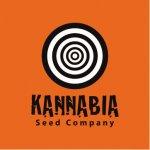 Kannabia Seeds Amnesi-K (Lemon) 1 ks