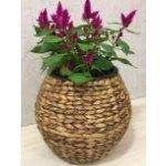 Květináč koule vodní hyacint SUNIX H-613213 S 30x30x27 cm