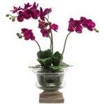 SIA fialová orchidej ve skle - SIA