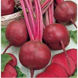 Řepa červená Detroit 2 - bio osiva řepy - rostlina Beta vulgaris var. vulgaris - 50 ks