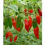 Tinktur Tinktura chilli papričky Habanero Forte 10x 25 ml
