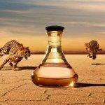 Shakira Wild Elixir toaletní voda dámská 30 ml
