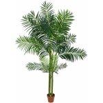 Areca palma 4kmenná 240cm