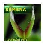 Masožravé rostliny - semena | Dionaea muscipula - mucholapka podivná | vigorous klon | 10 semen