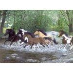 Malování podle čísel Běžící koně vodou