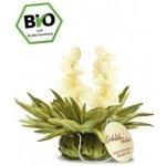 Tealini čaje kvetoucí čaj BIO bílý Vanilkový rozkvět 1 ks