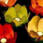Plovoucí lampiony leknín 29 cm mix