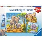 Ravensburger Divoká zvířata 3x49 dílků