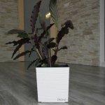 Lamela Květináč Juka Dluto 400x400, bílý