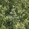 THUJA VG, 4x dílec 50 x 50 (Umělý živý plot - Bíle panašovaný jehličnan zerav)