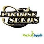 Paradise Seeds - Californian Gold 3 ks