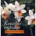 Kouzelné orchideje - Erfkamp Joachim