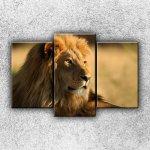 Dezign vícedílné dekorativní obrazy Pohled lva 4 (75 x 50 cm) - obraz 3 dílný 3D