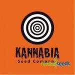 Kannabia Seeds -Purple Kush 1 ks