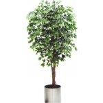 Umělý strom Fikus panašovaný - přírodní kmeny, 180cm