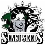 Super Skunk fem 5 ks Sensi Seeds