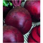 Semínka řepy - Řepa salátová - červená kulatá - prodej semen - 140 ks