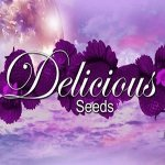 Delicious Seeds Marmalate 3 ks
