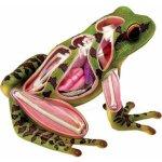HM studio 4D Anatomický model Žába