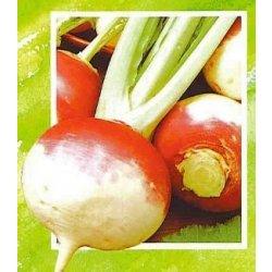 Osivo a semínko Vodnice červená - Brassica rapa L. - prodej semen vodnice - 0,8 gr