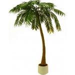 Palma 1-kmenná 300 cm
