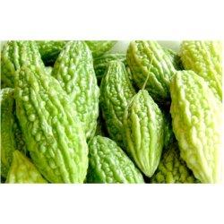 Semínka hořké okurky hořké dýně - Momordica charantia - Hořká okurka a Hořká dýně - prodej semen - 3 ks