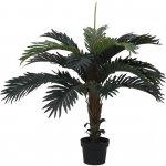 Kokosová palma, 90cm