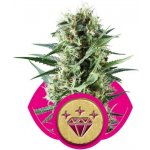 Special Kush n. 1 - feminizovaná semínka 10 ks Royal Queen Seeds