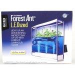 Forest Ant LEDized Antquarium
