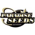 Paradise Seeds Jacky White 3 ks