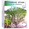 Rozinkový strom - Muchovník - Amelanchierova borůvka - 4ks