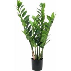 Zamifolia 70cm