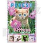 Stil Pexeso: Kočičky