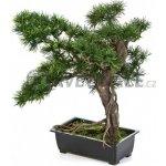 Umělá bonsaj pinus 38cm