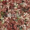 IRIMON Umělý živý plot - červené konopí 50x50 cm