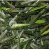 Umělý živý plot BAMBOO, výška role - 1,0 m (Bambus)