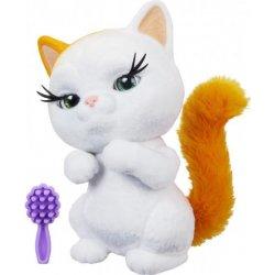 Mainská mývalia mačka je najstarším a jedným z najpočetnejších.