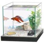 Cat-Gato Nano akvárium Cubic Pacific 20x20x20