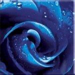 PARADYZ RUŽA sklenený dekor 20x20 Lesklé